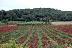 Istria-2009