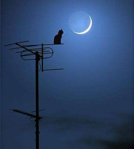 Storie della notte